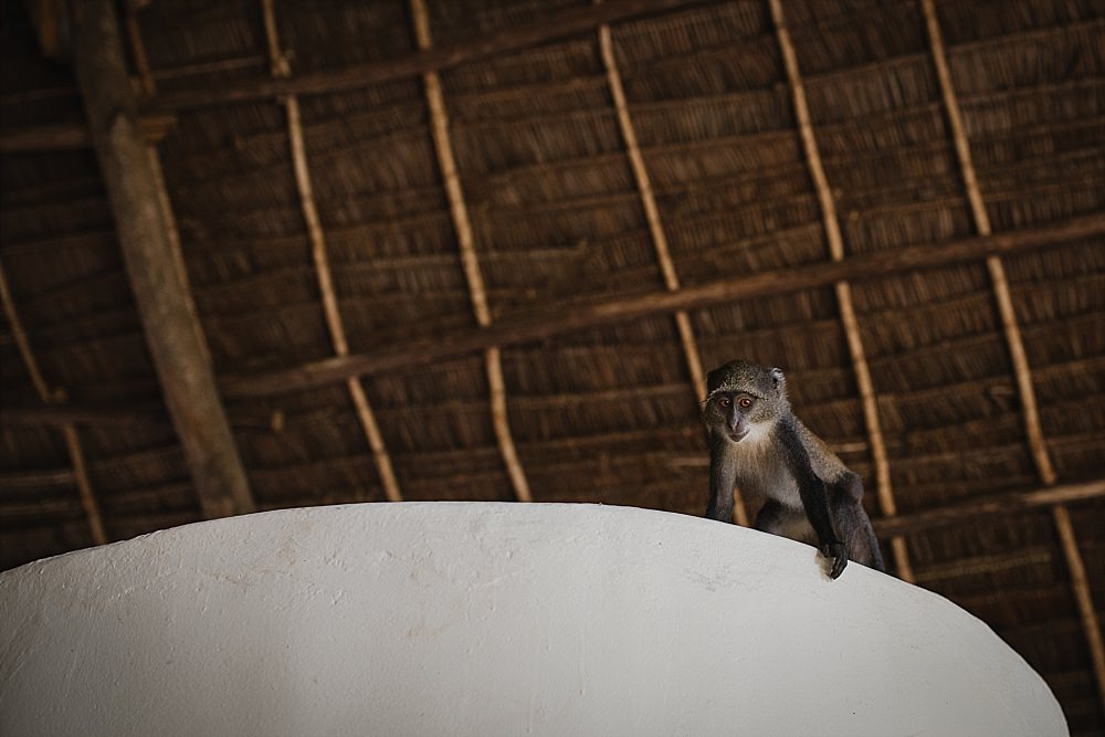 Personal photography monkey in our hut
