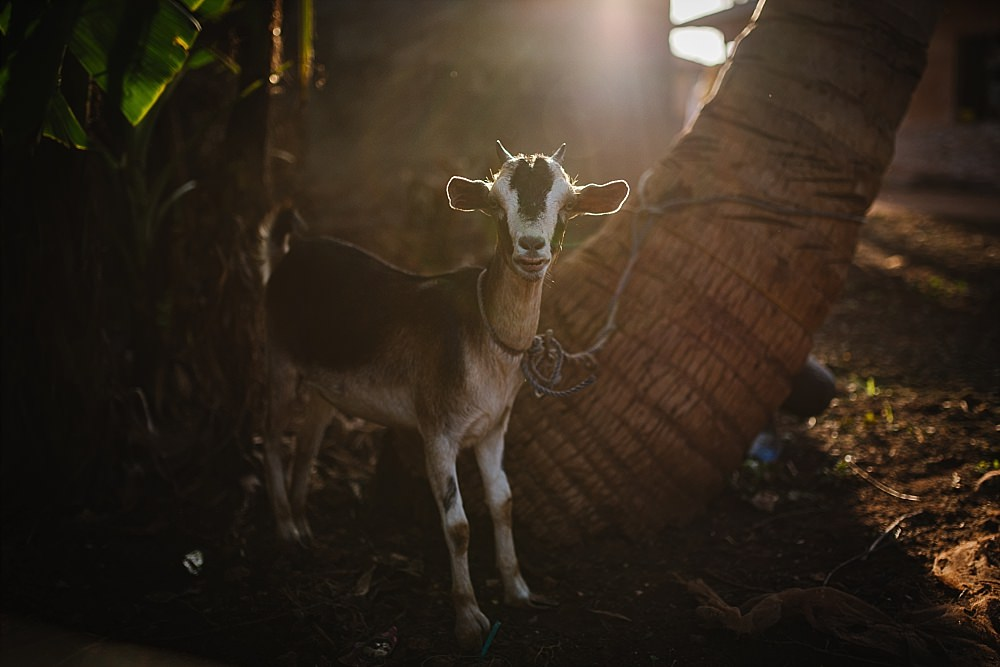 Personal photography blog Zanzibar village goat