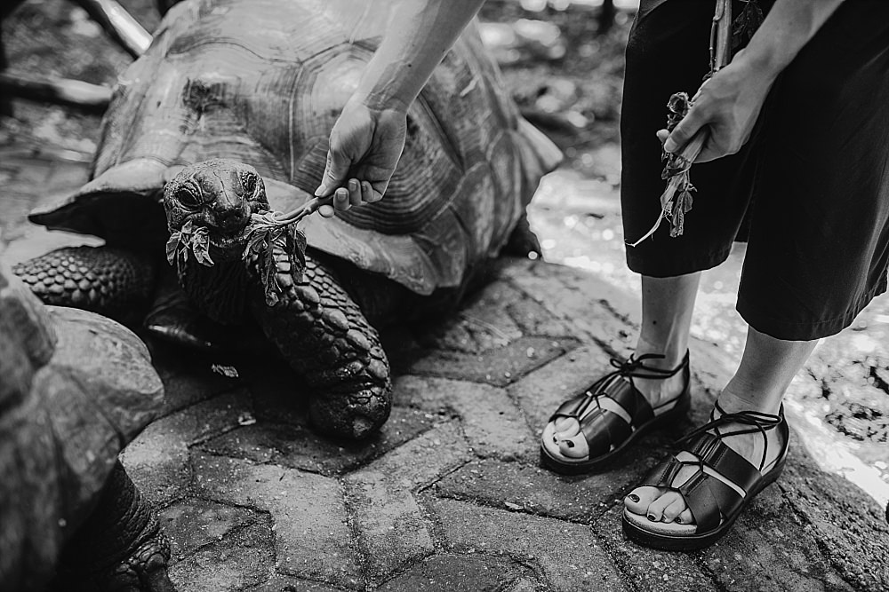 Personal photography blog Changuu Island feeding giant tortoise
