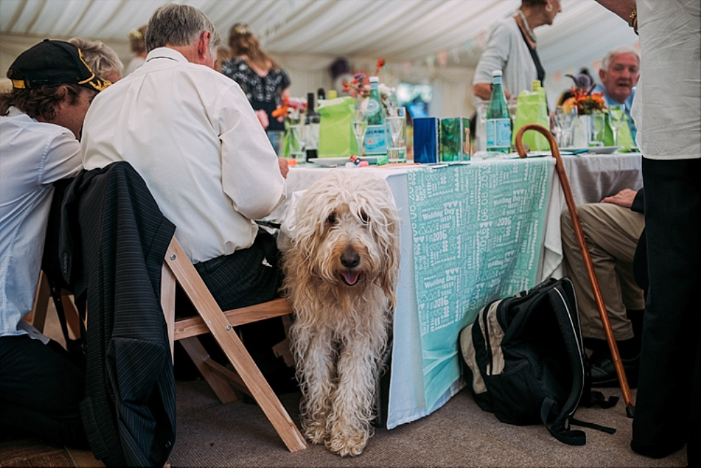 tetbury-wedding-photographer-holford-arms-pub-dog