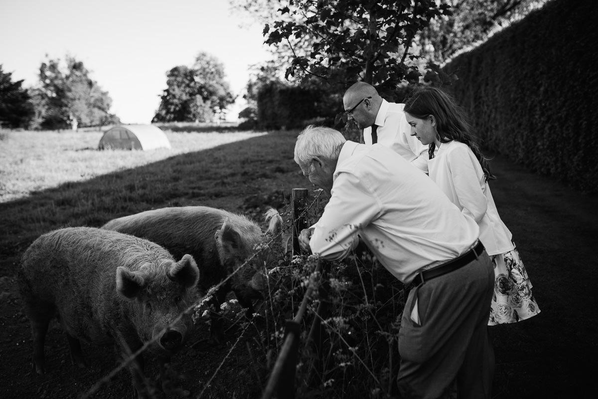 Dorset pigs at 10 Castle street Cranborne wedding photos