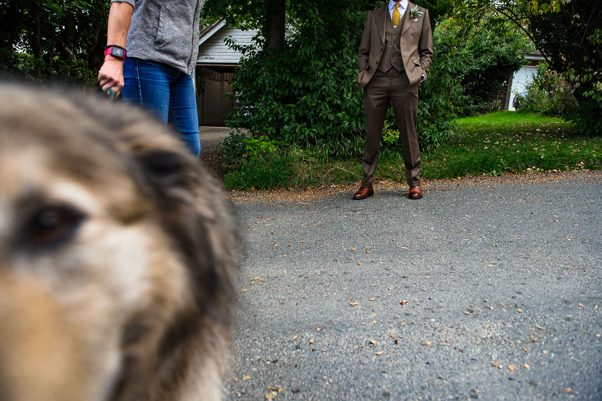 grooms suit and dog sniffing camera detail